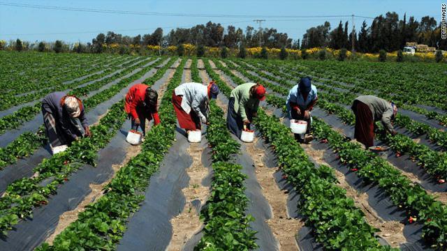 Culture maraîchère et sécurité alimentaire au Sénégal